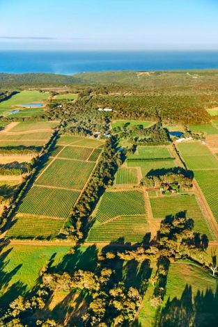 Moss Wood Vineyards with the Indian Ocean in the background. Courtesy of Frances Andrijich and Moss Wood