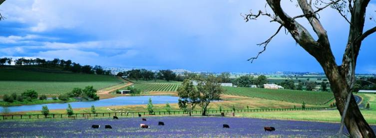 Falls vineyard lavender