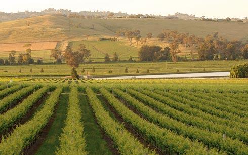Falls vineyard3