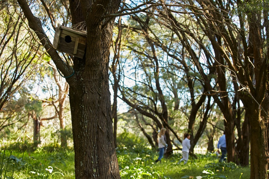 Passel Woodlands