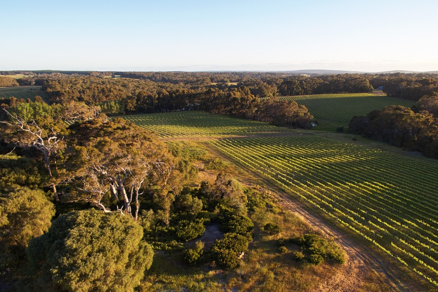 Passel bushland and vineyards