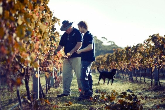 Windance Father and son in law amongst vines