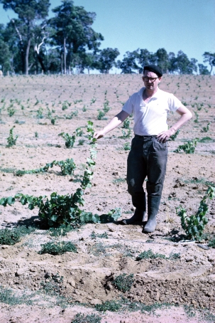 Tom Cullity (aged 43) with first Vasse Felix Vines
