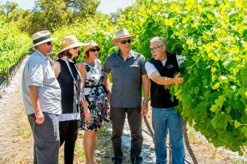 Vineyard 28 Winetour
