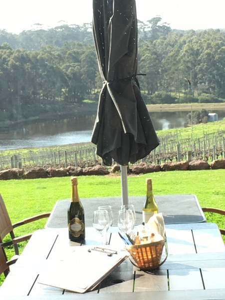 Hamilyn bay vineyards IMG_1729