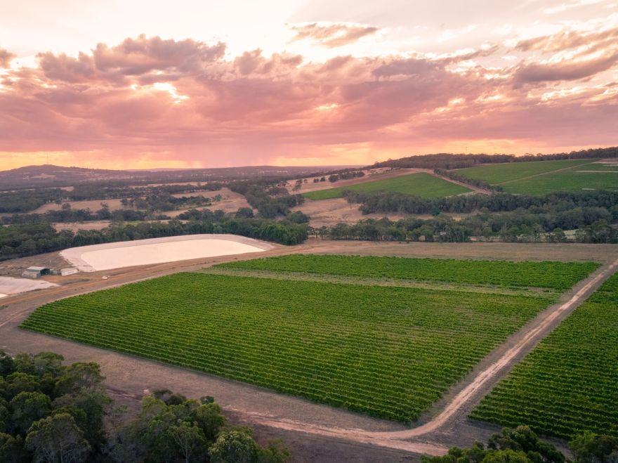 Marchand vineyard