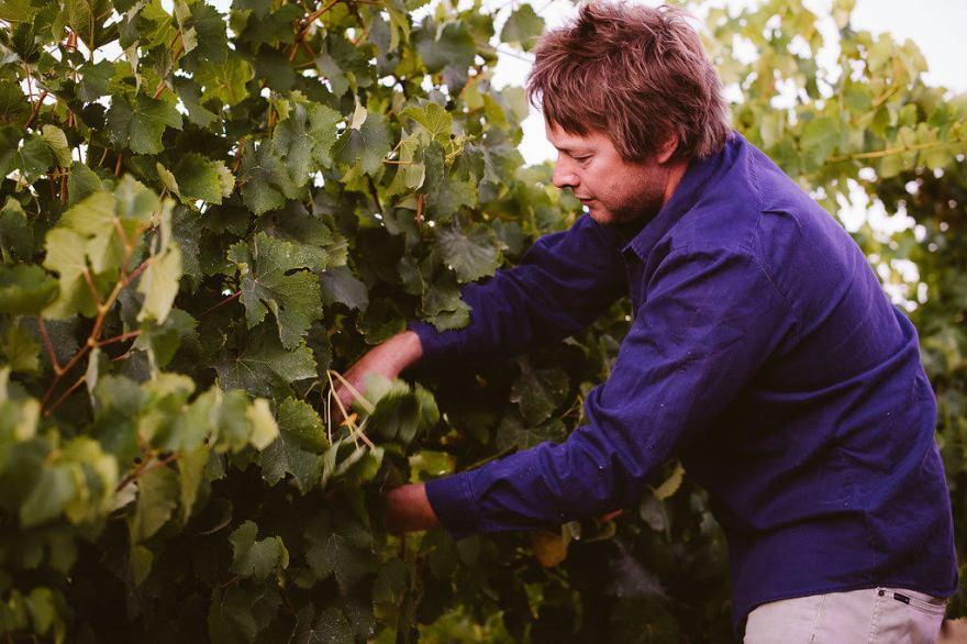 aravina ryan pruning