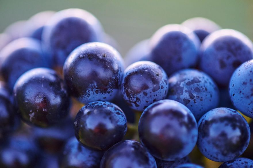 Cullen Cabernet grapes nQsiEYYQ