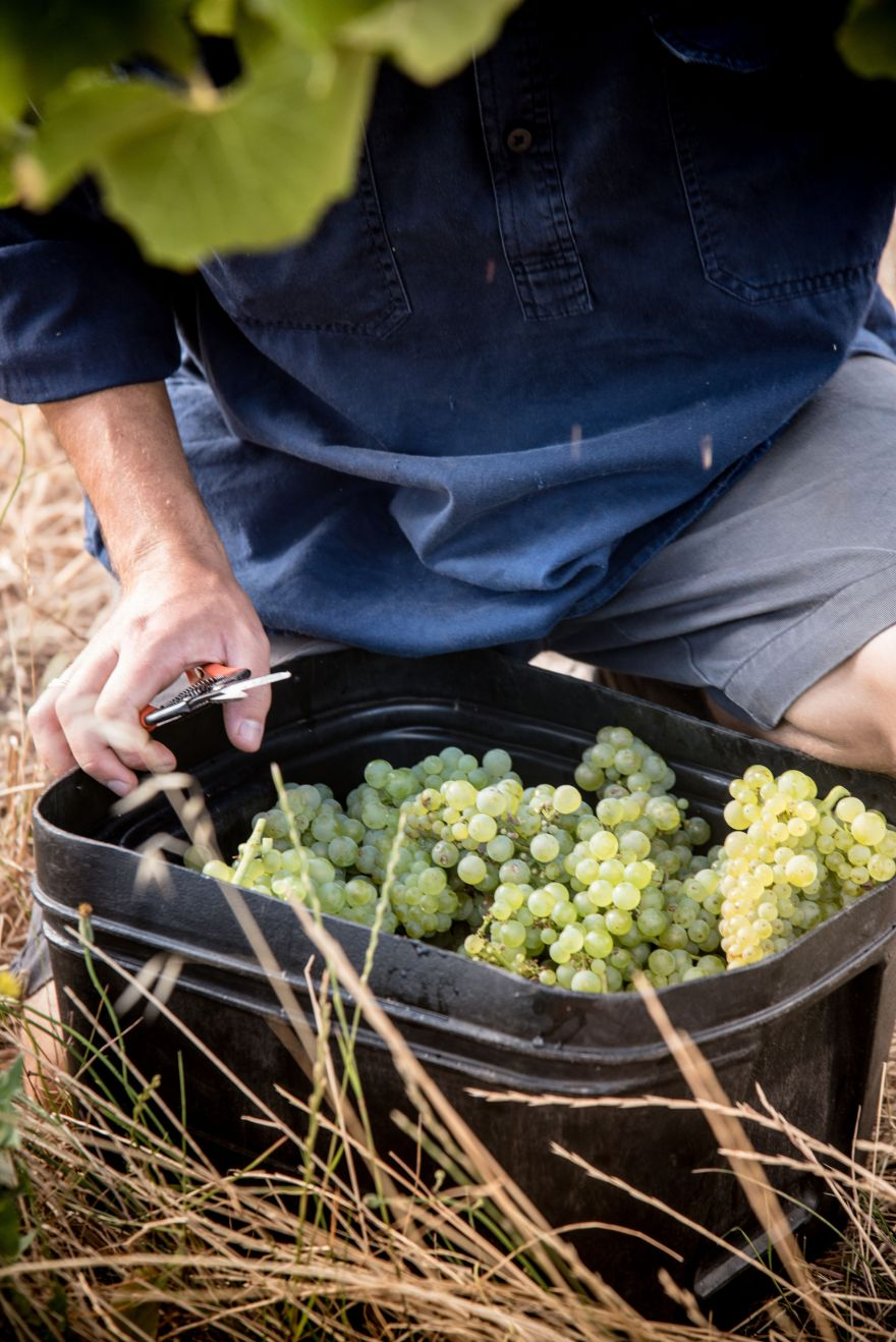 aravina bucket grapes x5xSDvnw
